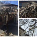 卒業祝いと春の予感♡我が家のお庭手入れの話