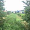 アリエッティのふるさと野川と優しいアロマの虫除け