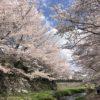 4月の営業日のご案内とプチお花見情報
